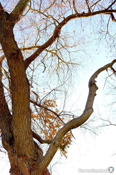Reach High - Photo Adventures on Campus
