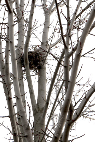 the lone nest